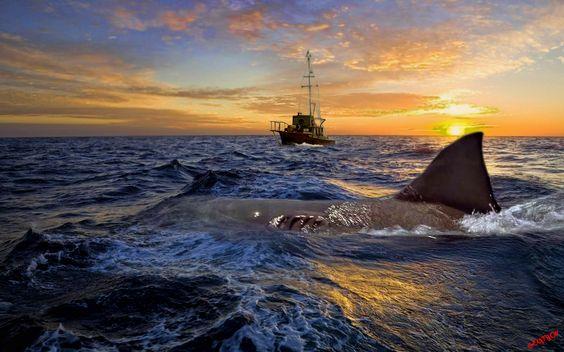 Kardinális oppozíciók A kép a Jaws című film egyik jelenete
