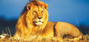 Az oroszlán szimbolikája